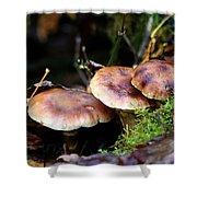 Fungus Among Us II Shower Curtain