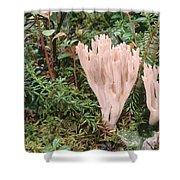 Fungus On Forest Floor Alaska Shower Curtain