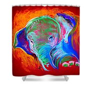 Funky Baby Elephant Blue Shower Curtain