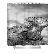 Funky Fungi Black And White Shower Curtain