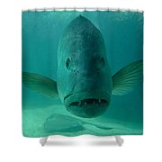 Funny Fish Face Shower Curtain