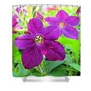Funny Flower Faces Shower Curtain