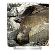 Fur Seal Shower Curtain