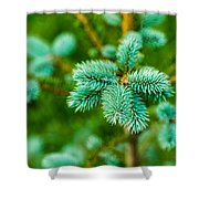 Furry Beauty - Featured 3 Shower Curtain