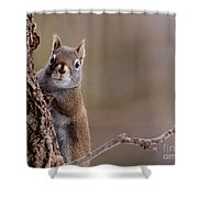 Furry Ears Shower Curtain