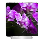 Fushia Orchid Shower Curtain