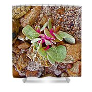 Fuzzy Plant On Blue Mesa Trail In Petrified Forest National Park-arizona  Shower Curtain
