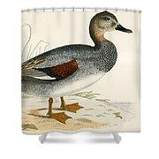 Gadwall Shower Curtain