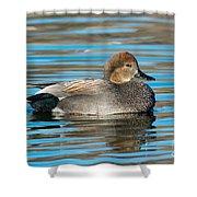Gadwall Duck Drake Swimming Shower Curtain
