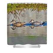 Gadwall Pair Swimming Together Shower Curtain