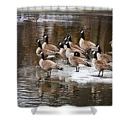 Gaggle Shower Curtain