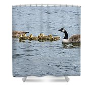 Gaggle Of Geese Shower Curtain
