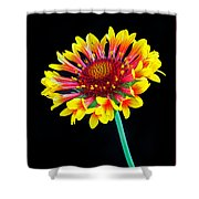 Gaillardia Arizona Sun Shower Curtain