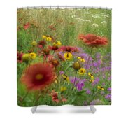 Gaillardia Coreopsis And Pointed Phlox Shower Curtain