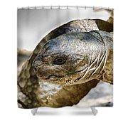 Galapagos Giant Tortoise V2 Shower Curtain