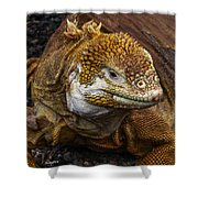 Galapagos Land Iguana  Shower Curtain by Allen Sheffield
