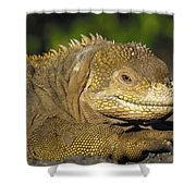 Galapagos Land Iguana Isabella Island Shower Curtain