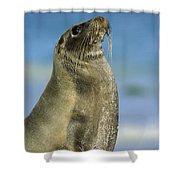 Galapagos Sea Lion Coral Beach Shower Curtain