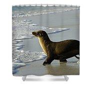 Galapagos Sea Lion In Gardner Bay Shower Curtain