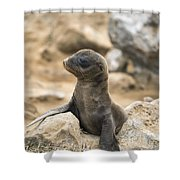 Galapagos Sea Lion Pup Champion Islet Shower Curtain