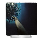 Galapagos Sea Lion Pup Fishing Shower Curtain