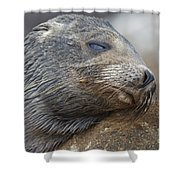 Galapagos Sea Lion Sleeping Shower Curtain