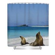 Galapagos Sea Lions On Beach Galapagos Shower Curtain