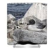Galapagos Seagull And Her Chick Shower Curtain