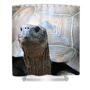 Galapagos Tortoise 1 Shower Curtain