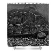 Galapagos Tortoise Baby Shower Curtain