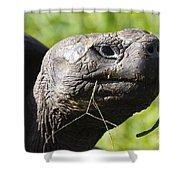 Galapagos Tortoise Galapagos Islands National Park Santa Cruz Island Shower Curtain