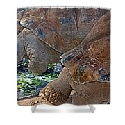 Galapagos Tortoise Shower Curtain