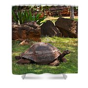 Galapagos Turtle At Honolulu Zoo Shower Curtain