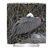 Galapagos - Watchful Pelican Shower Curtain