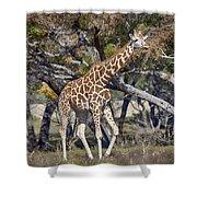 Galloping Giraffe  Shower Curtain