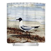 Galveston Gull Shower Curtain