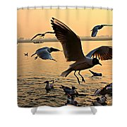 Ganges River Gulls Shower Curtain