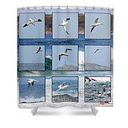 Gannets Galore Shower Curtain