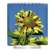 Garciacat Sunflower Shower Curtain