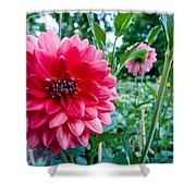 Garden Dahlia Shower Curtain