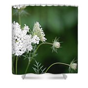 Garden Lace Group By Jammer Shower Curtain