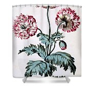 Garden Poppy With Black Seeds Shower Curtain