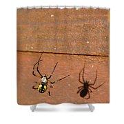 Garden Spider Shower Curtain