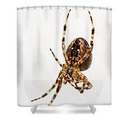 Garden Spider Profile Shower Curtain