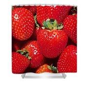 Garden Strawberries Shower Curtain