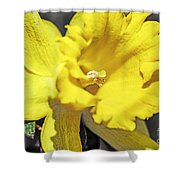 Garden Sun Shower Curtain