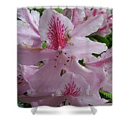 Garden Sunshine Shower Curtain
