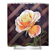 Garden Tea Rose Shower Curtain