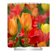 Garden Torches Shower Curtain