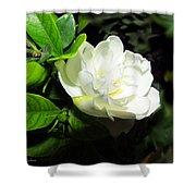 Gardenia 2013 Shower Curtain
